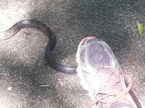 Dramatic Re-enactment of me almost stepping on the snake.